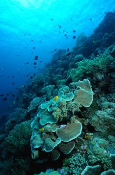 Coral reef diving is a beautiful experience that is just another thing I strive to do in my lifetime Life Under The Sea, Under The Ocean, Poisson Mandarin, Jacques Cousteau, Fauna Marina, Beautiful Ocean, Amazing Nature, Beautiful Images, Beneath The Sea