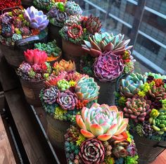 💐 Spruce up your space with these creatively potted succulents! - 💐 Spruce up your space with these creatively potted succulents! Succulent Gardening, Succulent Terrarium, Planting Succulents, Garden Plants, House Plants, Planting Flowers, Garden Hose, Garden Art, Colorful Succulents