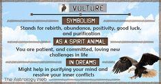 Animal Meanings, Animal Symbolism, Animal Spirit Guides, Your Spirit Animal, Power Animal, Animal Magic, Spirit Meaning, Dream Meanings, Animal Totems