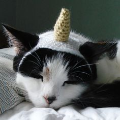 15+ #Crochet Patterns for Animals - Unicorn hat crochet costume for cat for sale from Lindsay Smith who sells a variety of pet costume patterns in her Ravelry shop