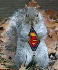 SuperSquirrel....Cheerful And Playful Squirrels (16)