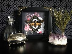 Deaths Head Moth Shadow Box, Taxidermy, Real Butterfly, Framed Butterfly, Preserved Butterfly, Victorian, Memento Mori, Gothic Decor by beyondthedarkveil on Etsy https://www.etsy.com/ca/listing/545943619/deaths-head-moth-shadow-box-taxidermy