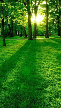 Cute Wallpaper Backgrounds, Wallpaper Downloads, Phone Backgrounds, Cute Wallpapers, Green Nature Wallpaper, Best Background Images, Science And Nature, Go Green, Garden Art