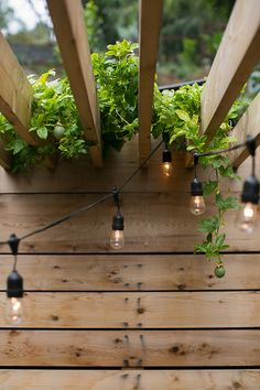 black globe lights from target on pergola with lime vines / sfgirlbybay