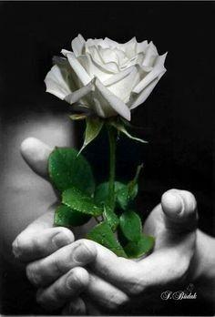 Color Splash, Color Pop, Beautiful Flowers Wallpapers, Beautiful Roses, Calming Pictures, Splash Photography, Rose Images, Tea Roses, Flower Wallpaper