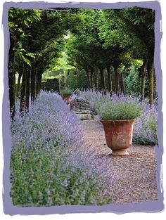 Lavender Path nooo it's not this is the beautiful Nepeta also growing al, over Provence ;) is part of Garden - Lavender Path nooo it's not this is the beautiful Nepeta also growing al, over Provence ; Formal Gardens, Outdoor Gardens, Garden Paths, Garden Landscaping, Landscaping Ideas, Country Landscaping, Modern Landscaping, Lavender Garden, Lavender Hedge