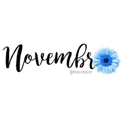 Meses do ano Congratulations to everybody who has a birthday in November Article Physique: It's simp Feed Insta, Bullet Journal 2, Pink October, November, Old Hollywood Glam, Cute Wallpaper For Phone, Screen Wallpaper, Months In A Year, Illustrations And Posters