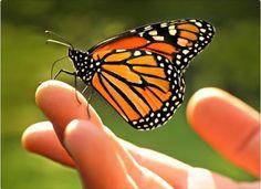Visite la Mariposa Monarca