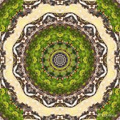 Mandala Kaleidoskop ''Moos'' Kreatives by Petra #mandala 'kaleidoskop #spiegelung #reflektion #reflection #innereruhe #inspiration #zierblüte #ornamentalflower #rosa #rose #blumen #flowers #blüten #blossom #frühling #spring #sommer #summer #home #deko #dekoration #plakat #poster #leinwand #canvas #moos Rosa Rose, Petra, City Photo, Stone, Outdoor Decor, Inspiration, Home Decoration, Poster, Summer