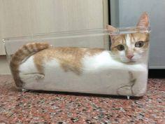 Enquanto este aqui optou por construir sua própria nave espacial. | 19 fotos que mostram que os gatos não são deste mundo