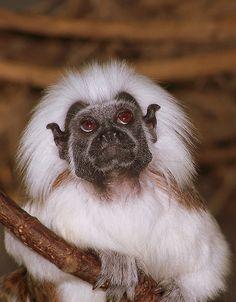 musing | Flickr - Photo Sharing! monkey