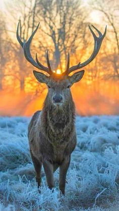 🧡 From Beautiful Wildlife Nature Nature Animals, Animals And Pets, Cute Animals, Wildlife Nature, Wildlife Photography, Animal Photography, Sunrise Photography, Travel Photography, Beautiful Creatures
