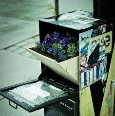 guerrilla garden, newspaper box