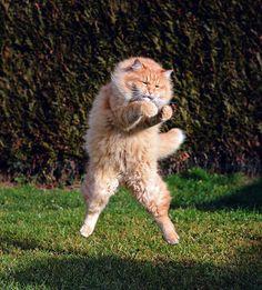 52 magnifiques photos de chats qui sautent 53 superbes photos de chats qui sautent jumping cats 18
