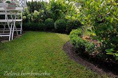 Zielona bombonierka: Trawnik na kant