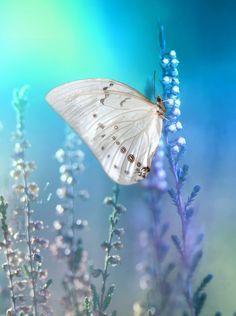 Butterfly by Laura Pashkevich on 500px