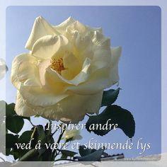 Inspirer andre ved å være et skinnende lys #inspirasjon #lys #light #austinrose #rose #roses #glede #garden #hagen #lovemygarden #lovemyflowers