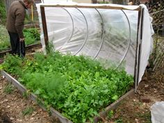 Cold Frame, Hoop House Style