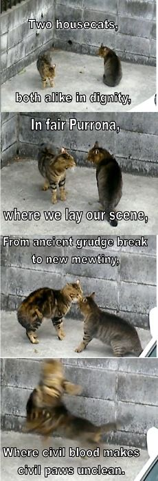 cats and romeo and juliet... Well this is pretty much just about perfect