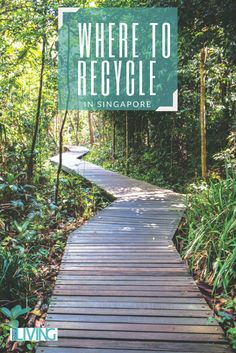 Find out where you can recycle in Singapore