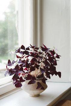 """Vous n'avez pas pu passer à coté.. En ce moment avec la tendance du """"green"""" on les trouve partout,   ce sont LES plantes tendances à avo..."""