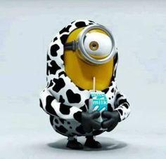 Got Milk? Minion ♊️