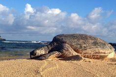 http://realestate.kauai.com South Shore Kauai Real Estate Guide| Kauai.com Real Estate