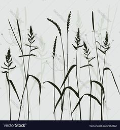 Image result for wild grass