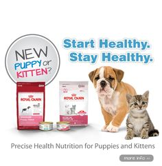 Royal Canin Foods