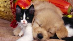 Dogs love cats! :)
