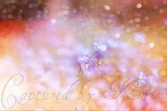 Floral Galaxy by Captured by Karen, via Flickr