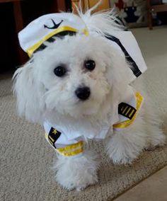 The cutest bichon puppy www.preludebichons.com