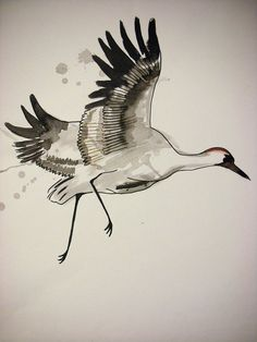 Crane drawing, Alice Thatcher 2012 ©