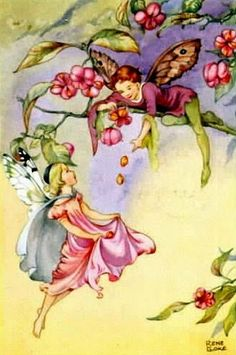 The Spindle Berry Fairies by Olde America Antiques. The Spindle Berry Fairies. Rene Cloke Fairies from Olde America Antiques Online. Fairy Paintings, Cicely Mary Barker, Fairy Pictures, Fairytale Fantasies, Vintage Fairies, Beautiful Fairies, Flower Fairies, Fairy Art, Magical Creatures