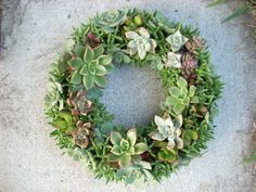 Succulent Wreath Kit 12-in. dia.: Gardenista
