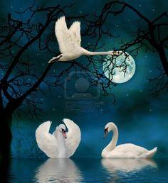 9209426-swans-in-the-moonlight.jpg (365×400)