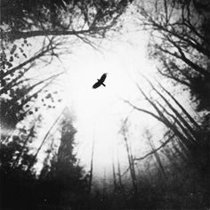 Angels Of Distress, photography by Zewar Fadhil
