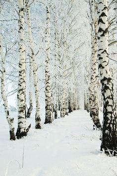 New winter landscape photography wonderland paths Ideas Winter Szenen, I Love Winter, Winter Magic, Winter Christmas, Winter Trees, Snowy Trees, Winter Walk, Hello Winter, Winter Socks