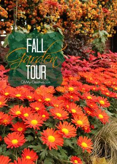 Everything you love about Fall can be seen in this beautiful Fall Garden Tour including a large variety of mums and garden decor ideas! Stunning!  |  OhMy-Creative.com