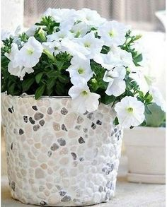 saksija za cveće
