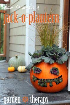 Jack o Planterns
