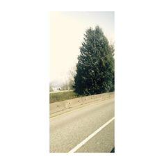 It's a tree and road