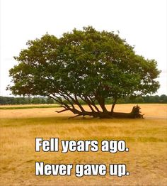 Never Give Up Quotes About Life And Happiness Precocious Spartan Fell years ago. Never gave up. Never Give Up Quotes, Giving Up Quotes, Life Quotes Love, Sassy Quotes, Keep Smiling Quotes, Fearless Quotes, Welcome To My Life, Learning To Be Alone, People Come And Go