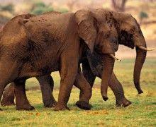 Elephants. www.meseek.com