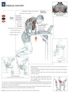 (910) How do I get bigger triceps? - Quora