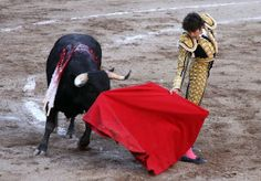 Bullfighting is a dangerous activity that causes mental and physical damage on helpless animals. Because it's heavily integrated in some cultures, it remains a common practice for sport and festivals. Demand that bullfighting be banned in Spain and help protect their rights as animals.