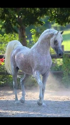 This horse looks exactly my horse and exactly an Arabian! But he passed away