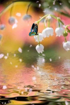 Beautiful Gif, Beautiful Birds, Beautiful Pictures, Cute Good Morning, Good Morning Sunshine, Butterfly Gif, Butterflies, Animiertes Gif, Good Night Love Images