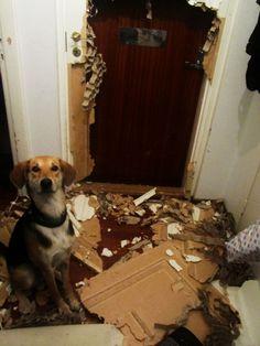perro destruye puerta donde lo tenían atrapado y se la come