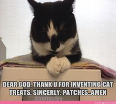 Kitty Prayers | Cute Captions